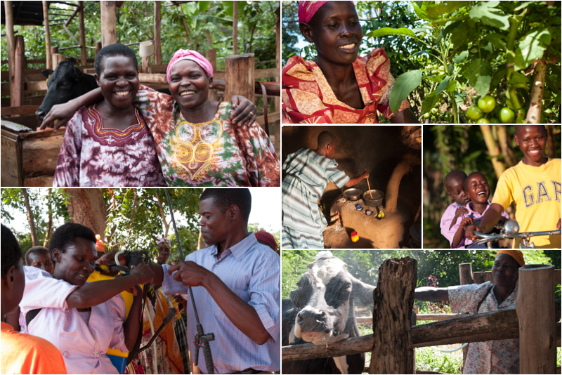 A collage of Send a Cows work in Uganda
