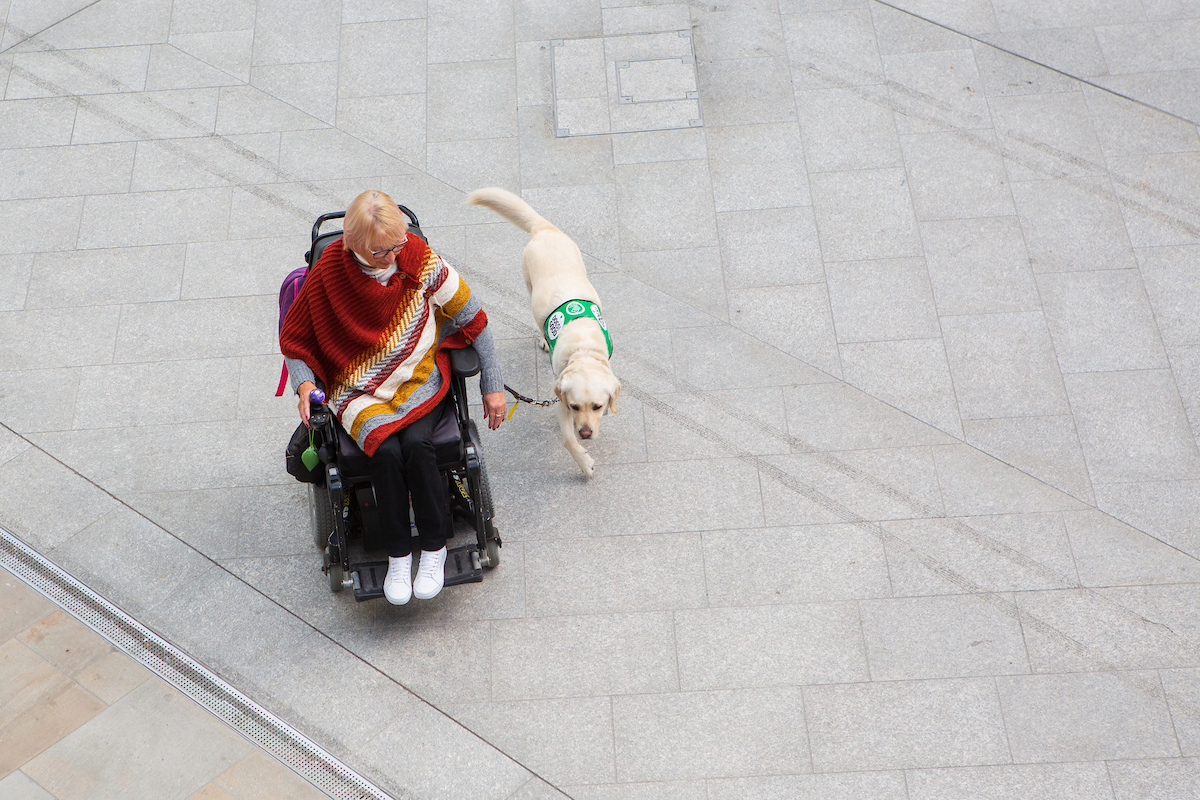 aerial shot of a woman in a wheelchair with her assistance labrador alongside her
